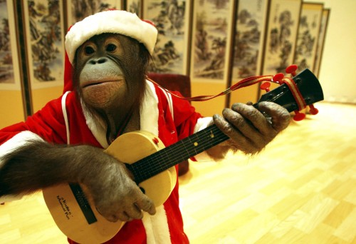 SEOUL, SOUTH KOREA - DECEMBER 20: Enbi, a four-year-old male orang-utan, dressed in a Santa Claus outfit, practices playing his guitar for a Christmas performance on December 20, 2005 in Seoul, South Korea. Christmas is one of the biggest holidays celebrated in South Korea with Christians forming over half the population. (Photo by Chung Sung Jun/Getty Images)