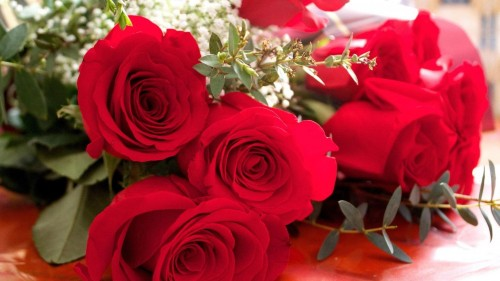 Holidays___International_Womens_Day__Terry_red_roses_on_March_8_060685_